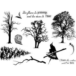 Ktz59-arbres-hiver[1]